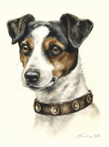 Jack Russell Terrier  Aquarell   Hundeportrait