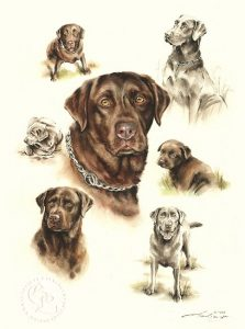 Labrador Retriever  Aquarell   Hundeportrait