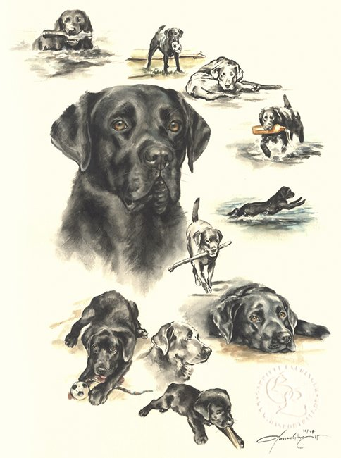 Labrador Retriver  Aquarell   Hundeportrait