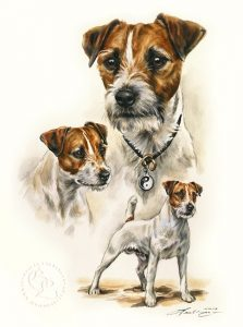Parson Russell  Aquarell   Hundeportrait