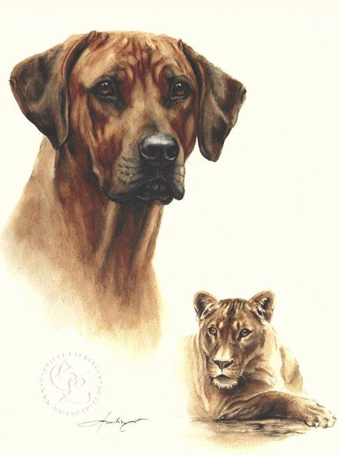Rhodesian Ridgeback  Aquarell   Hundeportrait