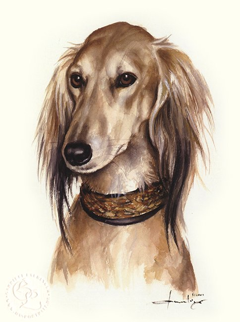 Saluki Aquarell   Hundeportrait