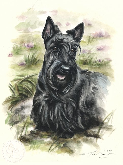 Scottish Terrier  Aquarell   Hundeportrait