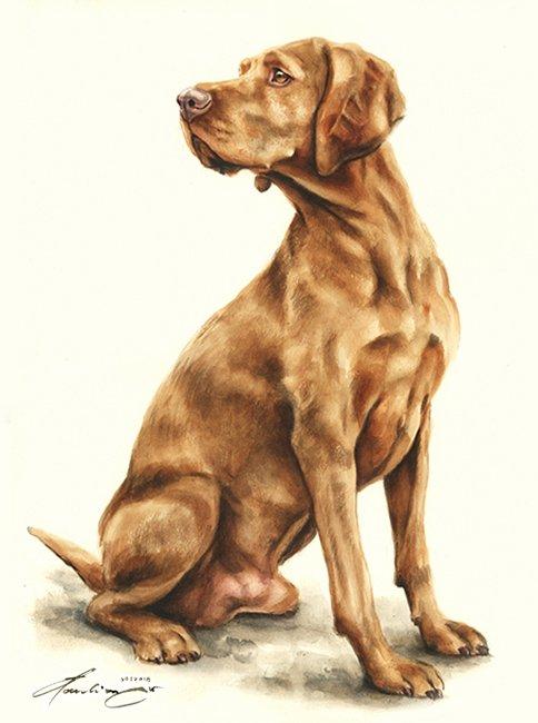 Vizsla Aquarell   Hundeportrait