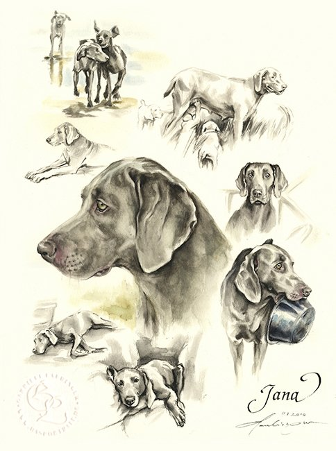 Weimaraner Aquarell   Hundeportrait