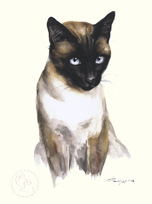 Siamkatze Aquarell   Katzenportrait