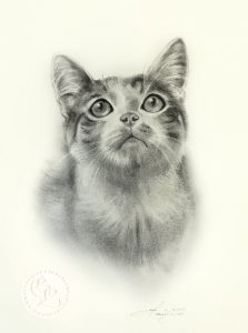 Zeichnung   Katzenportrait