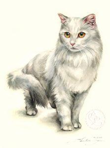 Aquarell   Katzenportrait