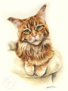 Katzenportrait nach Fotovorlage