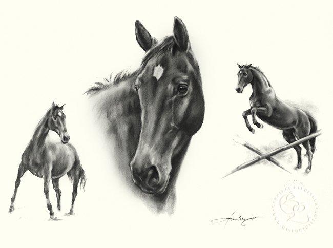 Zeichnung Pferde Portrait