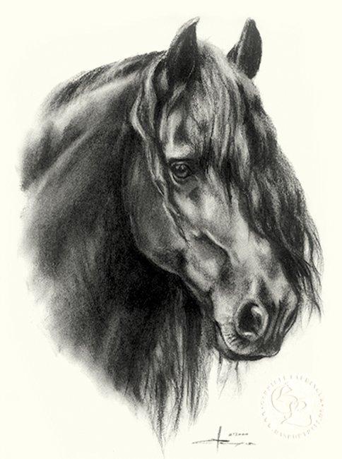 Friese Zeichnung Pferdeportrait