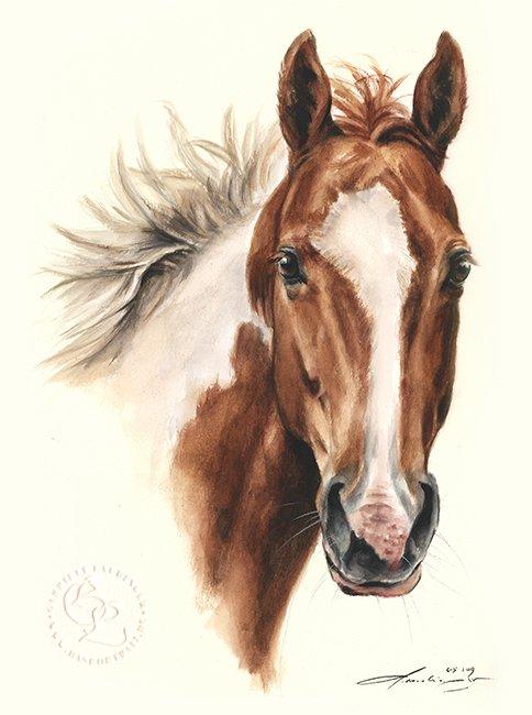 Schecke Aquarell Pferdeportrait