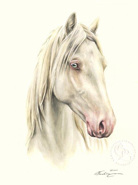 Schimmel Aquarell Pferdeportrait