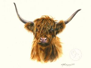 Highlandrind Aquarell   Tierportrait