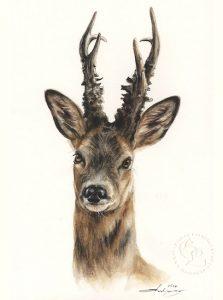 Reh Bock  Aquarell   Tierportrait