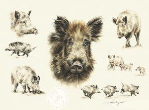 Wildschwein Aquarell   Tierportrait